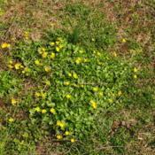 Location: Downingtown, PennsylvaniaDate: 2020-03-26patch of plants in lawn