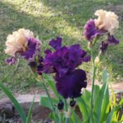 Location: Nocona,Texas zn.7 My gardensDate: 2020-04-22Seeing DOUBLE!