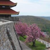 Location: Reading, PennsylvaniaDate: 2020-05-02in bloom at the Reading Pagoda