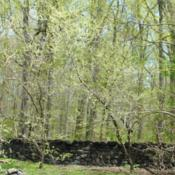 Location: northern DelawareDate: 2020-04-29two trees in a natural garden