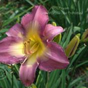 Location: Friend's Garden, SE MichiganDate: 2006-07-28