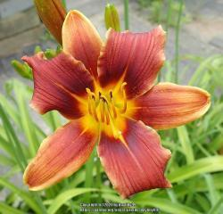 Thumb of 2020-08-29/daylilly99/98423a
