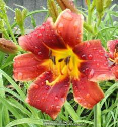 Thumb of 2020-08-29/daylilly99/b60aac