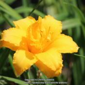 Location: all photos from my gardensDate: 2020-08-31