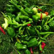 Location: Long Island, NY Date: October 2017mixed peppers