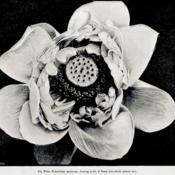 Date: c. 1885photograph from 'The Garden', 1885