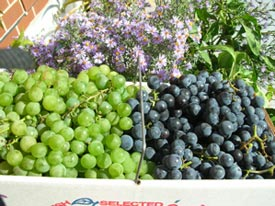 'Niagara' and 'Concord' grapes are end-of-season treats.