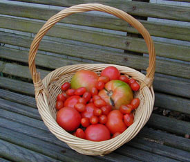 Many types of tomatoes can be grown in pots as long as you're willing to provide extra care.